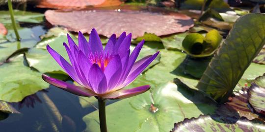 Mindfulness (Detachment / Mindfulness, Cognitive Mindfulness, Mindfulness and Cognitive Psychology)